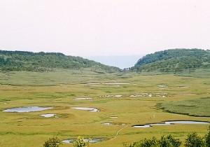 雨竜沼湿原 03'7