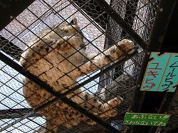 旭山動物園 こんな角度から猛獣が見られる!